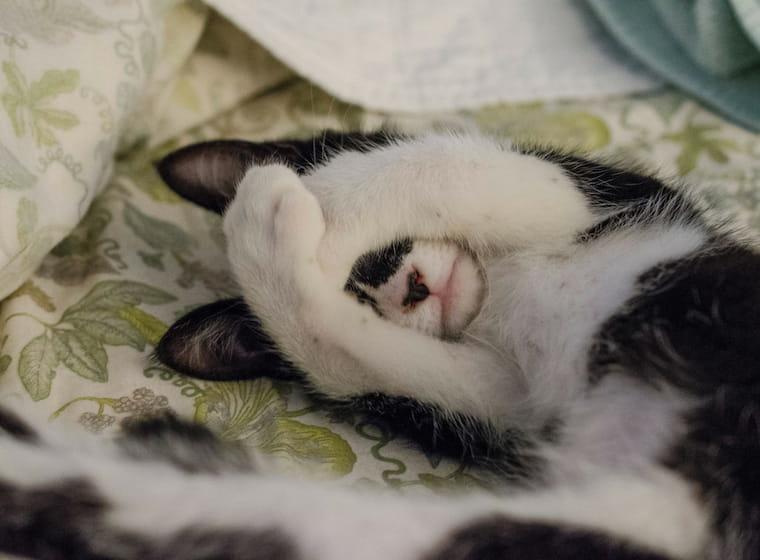 寝転んでいる猫